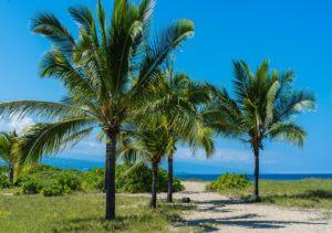 Von Palmen gesäumter Wanderweg auf Hawaii