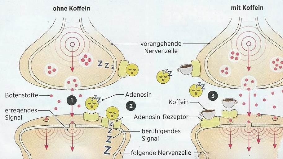 Acupuncture for Musculoskeletal Medicine 2009